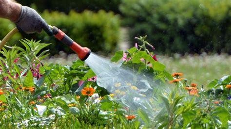 Garten Pflanzen Ohne Gießen by Pflanzen Gie 223 En Fehler Beim Gie 223 En Und W 228 Ssern Vermeiden