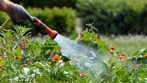 Pflanzen Bewässern Urlaub : pflanzen gie en fehler beim gie en und w ssern vermeiden ~ Michelbontemps.com Haus und Dekorationen