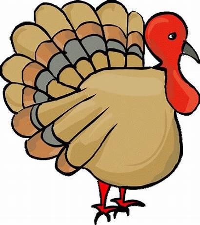Turkey Esl Vocabulary Farm Animals