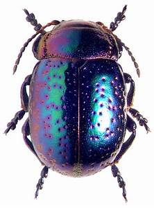 A well, Cobalt and Insects on Pinterest