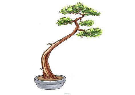 bonsai äste schneiden bonsai schneiden 187 die besten anleitungen mit tipps und tricks