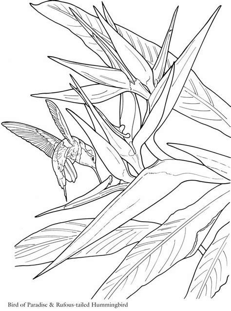 hummingbirds and bird of paradise flower | Bird coloring pages, Dover coloring pages, Coloring pages