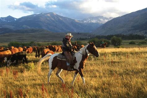 ranch montana cowboy cowboys horse ranches dude vacations western cattle west riding american spur cowgirls america guest lifestyle cowgirl drive