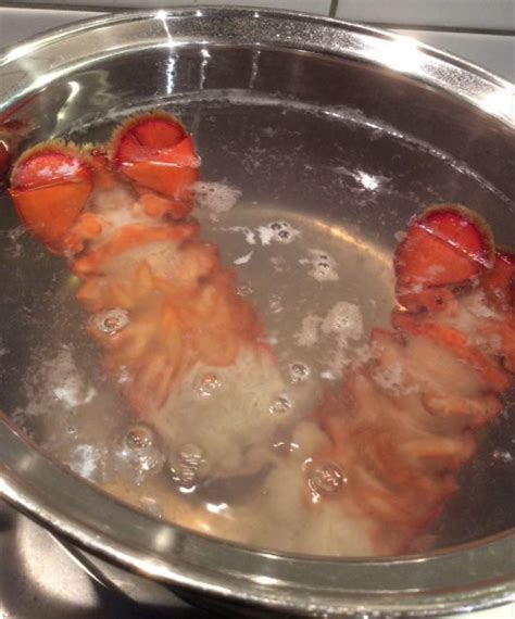 boiling lobster tails pinterest the world s catalog of ideas