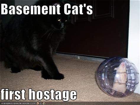 Flooded Basement Meme - best 25 basement cat ideas on pinterest japanese surrender date black cat illustration and