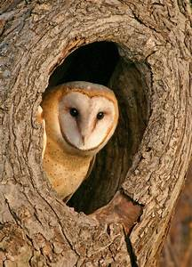 Hearing Skills Of Barn Owls Could Map Way To Find Problems ...