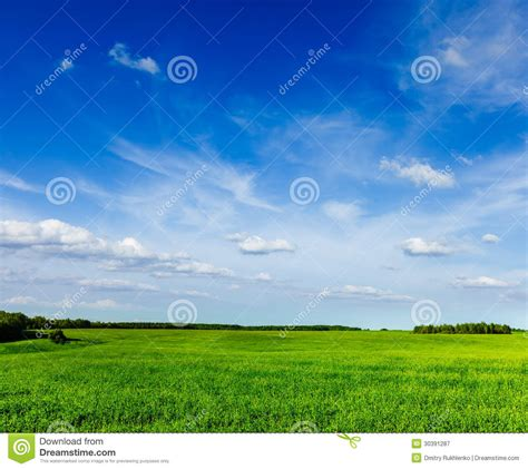 spring summer green field scenery lanscape royalty