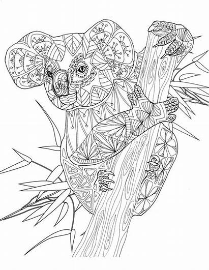 Coloring Pages Adult Koala Colouring Animals Animal