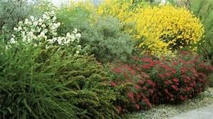 Quels Arbustes Pour Une Haie : id e de jardin cr er une haie fleurie et parfum e ~ Premium-room.com Idées de Décoration