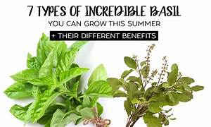 7 Types Of Incredible Basil You Can Grow Their Different