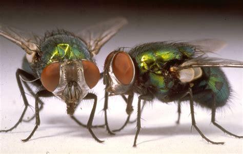 comment se d 233 barrasser des mouches dans la maison naturellement