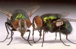 Se Débarrasser Des Mouches Naturellement : comment se d barrasser des mouches dans la maison naturellement ~ Melissatoandfro.com Idées de Décoration