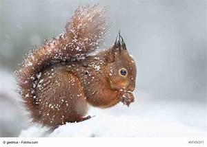Eichhörnchen: Bitte füttern, damit der Nachwuchs den