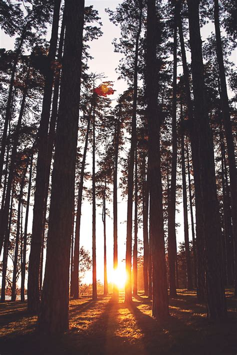 tumblr background nature trees photography