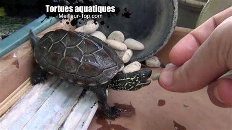 tortues aquatiques tortue d eau nourriture