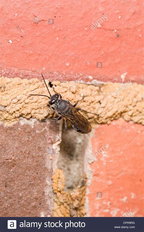 wespen bauen nest verhindern wespen bauen ein nest rund um einen schlitten gifhorner