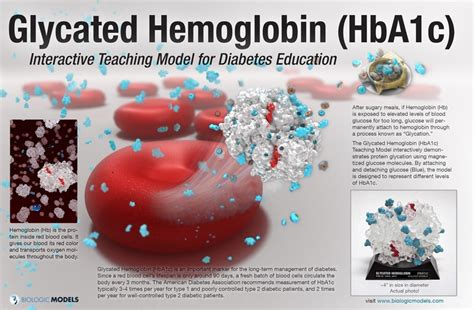 glycated hemoglobin hbac biologic models