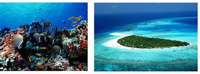 Maldives Tourism Environment Impacts Consequences Weebly