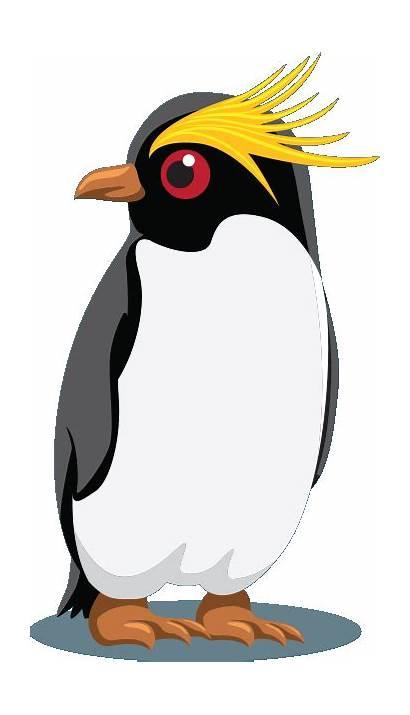 Rockhopper Penguin Freeland Fiber Login Alli Computer