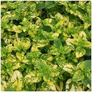 Plante Repulsif Mouche : les 10 plantes anti nuisibles pour le jardin et la maison guide complet ~ Melissatoandfro.com Idées de Décoration