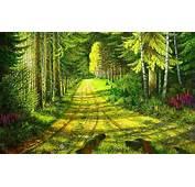 Beautiful Forest Path Wallpaper  1680x1050 29328