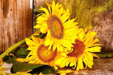 Come abbiamo già detto, non esiste un fiore giusto da regalare per il compleanno. Fiori per compleanno: a ciascuno il suo