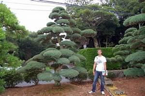 Pflanzen Für Japangarten : bonsai zentrum m nsterland gmbh ~ Sanjose-hotels-ca.com Haus und Dekorationen