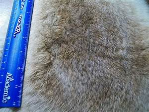 Large Rabbit Fur Close Up By Kalik Ing Away On DeviantArt