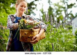 Einen Korb Bekommen Englisch : reifer mais stockfoto bild 112123181 alamy ~ Orissabook.com Haus und Dekorationen