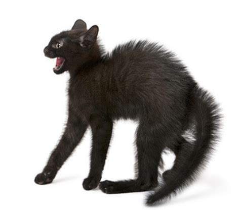 anti katzen pflanze katzenabwehr gegen katzen