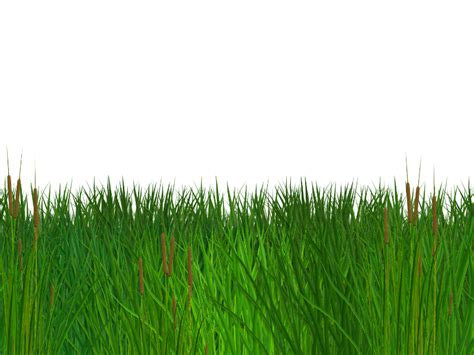Seamless Grass Clipart Images Gallery For Free Download