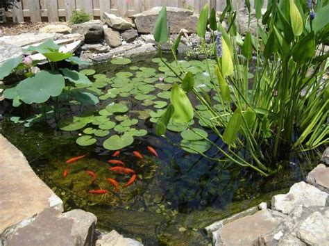 Garden Goldfish by Goldfish Ponds Water Gardens The Pond Doctor The