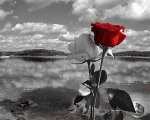 Red irises wall decor : Black white red rose lake landscape photography wall art