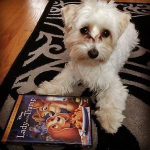 101 Movie-Inspired Dog Names - BarkPost