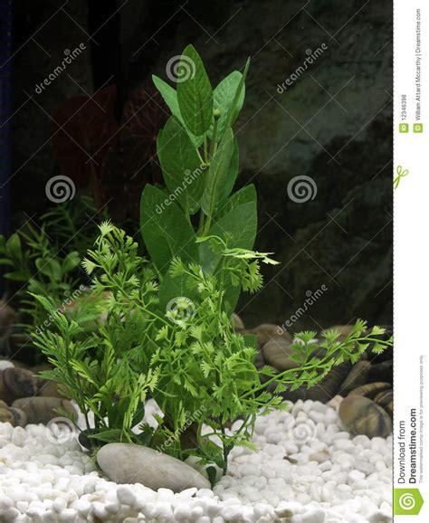 Aquarium Surface Plants