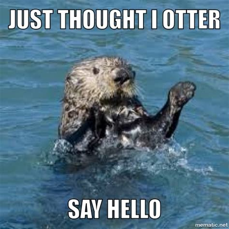 Funny Otter Meme - 54 best you otter know images on pinterest otters funny animal pics and funny stuff