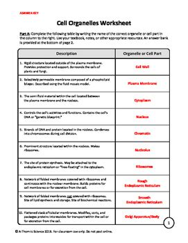 cell organelles worksheet   thom ic science tpt