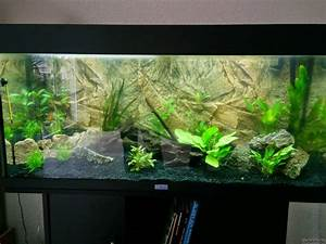 Co2 Rechner Aquarium : einsteiger 180 l flowgrow aquascape aquarium database ~ Orissabook.com Haus und Dekorationen