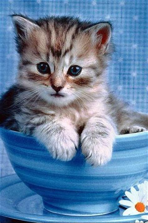 Download Cute Cat Live Wallpaper For Android, Cute Cat