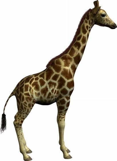 Animal Clipart Clip Giraffe Graphics Cliparts Resolution