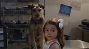 Family Review: Robo-Dog: Airborne #Lionsgateathome - Debt ...