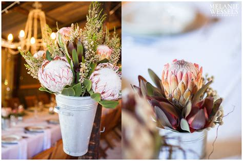 liesel stephan  cowshed melanie wessels photography