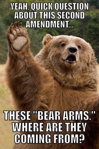 whos   lighter funny bear meme