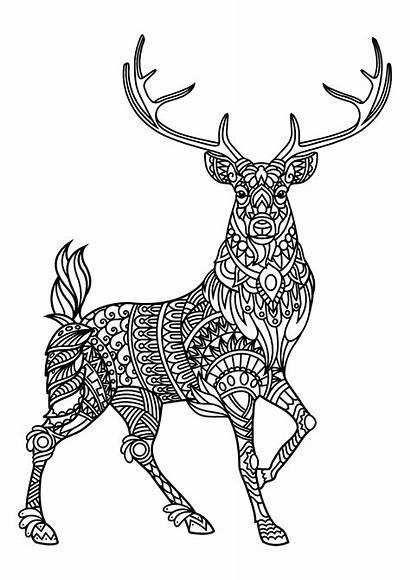 Deer Coloring Deers Complex Patterns Pages Adult