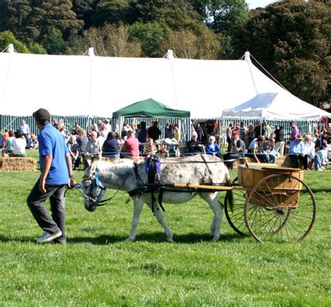 governess victorian cart donkeys childs donkey order tack