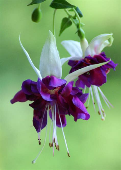 33 Best Images About Fuchsia On Pinterest  Purple, My Dad