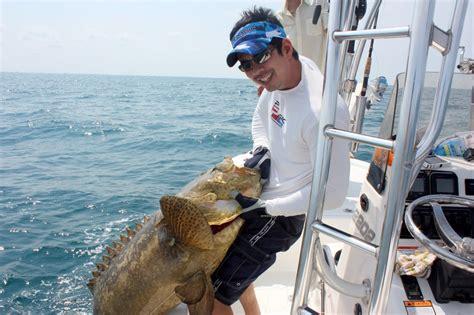 grouper goliath catch fishing