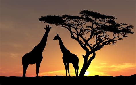 Animal Silhouette Wallpaper - nature landscape animals trees sunset silhouette