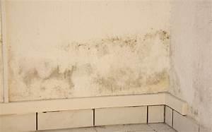 Schimmel In Wohnung Mietrecht : leichter schimmel in der wohnung die schimmel h lle studiwohnung feuchte souterrain wohnung ~ Watch28wear.com Haus und Dekorationen