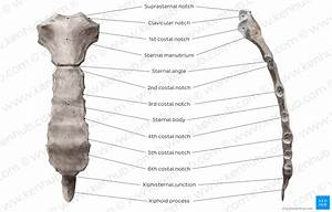 Diagram    Pictures  Sternum  Anatomy